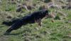 DSC_0118.jpg (bigbamboy) Tags: luna sternchen lunaundsternchen hund dobermann
