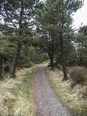 (Turbogirlie) Tags: naturalwales ceredigion cardiganbay aberystwyth bwlchnantyarian forestrycommission hinterland penpumlumonfawr pumlumon plynlimon midwales forests trees hills mountains sea scotspinetree