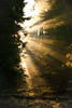 (mateuszb2) Tags: morning sun rays light beams beautiful forest podlasie poland spring swamp trees explore travel