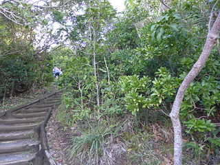 Cape Byron Coastal Path