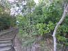 Cape Byron Coastal Path (tanetahi) Tags: capebyron wategosbeach littoralrainforest coastalrainforest subtropical newsouthwales australia tanetahi