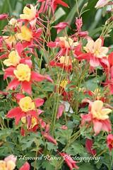 Longwood Gardens Spring 2017 (199) (Framemaker 2014) Tags: longwood gardens kennett square pennsylvania tulips united states america