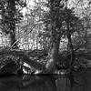 """rivière dite """"Rivière des Douze Moulins"""" (JJ_REY) Tags: rivière douzemoulins bw mediumformat 6x6 ilford delta100 hasselblad 501c epson v800 alsace france"""