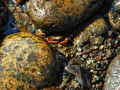 camouflaged crab (panoskaralis) Tags: crab water waterfront sealife sea seascape seashore seaside rocky rockybeach beach fygokentrosbeach haramidabeach stone lesvos lesvosisland mytilene greece greek greeknature greeksummer hellas hellenic macro aegean aegeansea