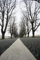 The road ahead... (steffenz) Tags: 12mm 2018 baddoberan deutschland germany lenstagged nex nex6 walimex walimex12mm walimexpro12mm120ncscse samyang samyang12mm sony steffenzahn mecklenburgvorpommern mecklenburgwesternpomerania