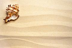Shell on a wavy sand (www.layerplay.design) Tags: allegroprint art bto bungalow canvas coast decosticker designcollective era fabric furniture furnituresticker hdb ikea interior interiordecor layerplay orangetee porperties poster posterprint print printerior privateestate privatehousing property propertyguru sea sticker wallart background beach border coastline design frame holiday idyllic macro marine natural nature ocean pattern sand seashell seashore shell summer texture travel tropical vacation wall