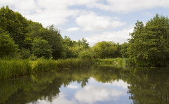 Endless green (Anxious Silence) Tags: england countryside surrey knaphill outdoors summer walking countrypark uk water lake landscape reflection
