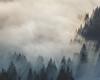 Mer de nuages au dessus du Léman II - Cergniaule (Mathieu Noel) Tags: suisse switzerland alpes alps swissalps montreux cergniaulle lacléman lacdegenève neige hiver snow wintersapin brouillard fog nuages clouds nature wild light