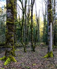 (ScottElliottSmithson) Tags: dtwpuck scottsmithson scottelliottsmithson pacificnorthwest nature landscape iphone