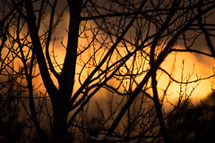 Sunset Through the Trees (Mikko Manner) Tags: sipoonkorpinationalpark nikond7200 tamron18400mmf3563diiivchld sunset trees forest finland vantaa sipoo warmcolors soothing relaxing nature twigs branches