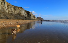 Walking the Dogs (janroles) Tags: outdoor blue clouds beach shore january sand coast england charmouth seascape view scenic cliffs dogs walker reflections water sea canoneos6d nature landscape people serene