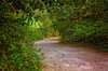 Winding path at Bellingrath Gardens in Theodore Alabama (CarmenSisson) Tags: alabama bellingrathgardens gulfcoast theodore flowers gardens outside tourism touristattractions path trail road sidewalk winding nature usa