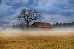 Scheune im Nebel (williwacker85) Tags: scheune nebel fog wolken clouds felder feld acker baum