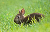 Bokeh Boca Bunny (Jamie Felton Photo) Tags: bocaraton springtime spring rain green grass easterbunny marshrabbit bunny specanimal