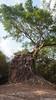 Prasat Daem Chrei Temple, Sambor Prei Kuk (Travolution360) Tags: cambodia sambor prei kuk prasat daem chrei ancient ruins history sanskrit india kampong thom chenla khmer ways tuktuk nature roots forest walk travel