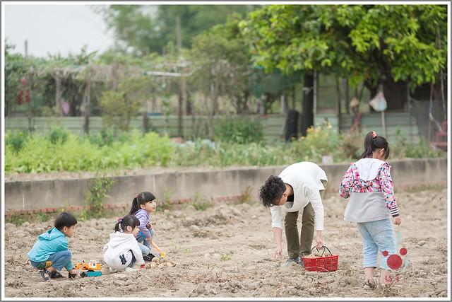 火龍果園星光野餐Ⅱ 找地瓜 烤地瓜 吃地瓜 (9)