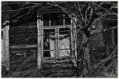 window (pavelfadeevv) Tags: window photo photography mood bw still art color monochrome blackandwhite stilllife beautiful beauty wooden vintage background light drink food fruit berries glass cup flowers nature coffee morning animals landscape