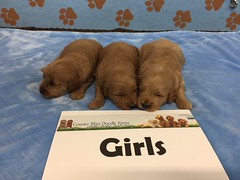 Dakota Girls pic 4 4-15