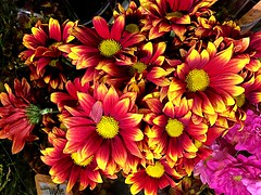 Have a Great Day ... !! (RenateEurope) Tags: flora flowers iphoneography 2018 renateeurope awesomeblossoms