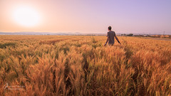 Field of... (Israel Nature Photography by Ary) Tags: canon israel nature goldenhour wheat field south sunrise sun selfportrait 6d fullframe tokina 1116 morning