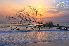 台灣-台南七股防風林日落 (黃昱峰) Tags: 台灣 台南 七股 防風林 日落 風景 landscape sunset colour cloud tree