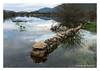 Mother Nature... (Joao de Barros) Tags: joão barros nature wild lake