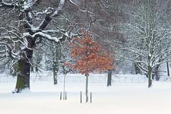 Still With Leaves (Julian Barker) Tags: bramcote hills park autumn winter spring snow virgin russet brown contrast comparison nottingham nottinghamshire east midlands england great britain uk europe julian barker canon dslr 5d mkii