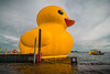 Flash Back Friday -  Rubber Duck in Toronto's Harbour (A Great Capture) Tags: overcast lakeontario lake waterfront harbour toronto rubber ducky duckie duck yellow flashbackfriday fbf agreatcapture agc wwwagreatcapturecom adjm ash2276 ashleylduffus ald mobilejay jamesmitchell on ontario canada canadian photographer northamerica torontoexplore summer summertime été 2017 outdoor outdoors vibrant colorful cheerful vivid bright
