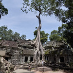 Templo Ta Prohm, Angkor, Camboya thumbnail