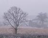 Alone (harry_41) Tags: fields snow tree white blizzard cold winter weather nikon devon england fog landscape