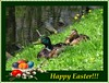 ...for you :) (green_lover) Tags: easter card ducks mallards birds green