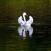 swan lake (sculptorli) Tags: nymphenburgpalace bavaria bayern nymphenburg swan reflection deutschland germany schlosnymphenburg palacio palace