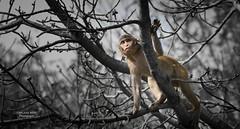 Looking for an uplift (bilashroy.chandra1) Tags: abstract nikonphotography india d3300 animal wildlife