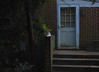 Spotlight on Gracie Jo (rootcrop54) Tags: graciejo neighbors neighbor cat friend dilute calico brickwall dusk neko macska kedi 猫 kočka kissa γάτα köttur kucing gatto 고양이 kaķis katė katt katze katzen kot кошка mačka gatos maček kitteh chat ネコ