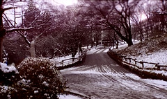 japan's Winter Beauty (yagisu) Tags: tokyosnow snow japan nature vintage ruraljapan dof trees rural snowy sunset ancientvillage climatechange globalwarming winter