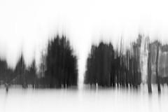 Treeline 2 - 20/100 X (mfhiatt) Tags: img04710218jpg trees blur winter oof icm outoffocus intentionalcameramovement 100xthe2018edition 100x2018 image20100 blackandwhite minimalist minimalism minimal