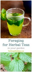 Foraging for teas is (Fitness Intents) Tags: healthy fitness weight loss motivation motivate