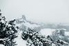 DSC_0525 (Cissa Rego) Tags: dorset snow winter landscape landscapephotography landscapephotographer snowylandscape westlulwort lulworth durdledoor isleofpurbeck purbeck purbecks manowarbay stoswaldsbay corfe corfecastle arne rspbarne deer nikon nikonphotography