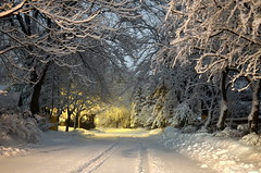 A dream of fairytales and warm mittens (Captions by Nica... (Fieger Photography)) Tags: serene snow snowstorm storm suburbs trees tree nature outdoor cold covered winter weather wonderland road street light march quebec canada homes