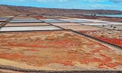 Lanzarote - Salinas de Janubio (madbesl) Tags: lanzarote salinasdejanubio salz salt insel island kanarischeinseln canaryislands olympus omd m10 em10 omdem10 zuiko1250 salzgewinnungsanlage saltflat