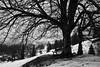 Emptiness (Cornelli2010) Tags: canon1635mmf4lisusm canoneos5dmarkiii bw bank baum bench blackandwhite emptiness landscape landschaft leer natur nature schwarzweis tree winter