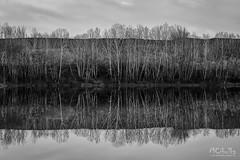 Trees (MarioCibulka) Tags: black reflection white trees lake scenic nature water season moody cloudy mirror forest idyllic landscape wonderful weather natural sky blackandwhite view peaceful minimal scenery treereflection