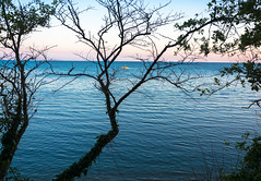 View of the sea through the branches of a tree. (cfdtfep) Tags: sea blue beautiful green nature tree sky view ocean through background water scenic coast beauty summer bright plant leaf landscape foliage branches scenery russianfederation