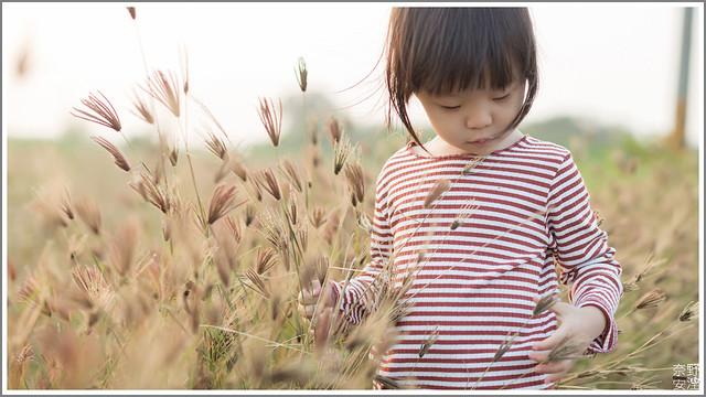3月台南 親子寫真可以這樣拍 木棉花 蜀葵 小麥 一次讓你拍個夠 (27)