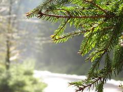 IMG_7750 (germancute) Tags: outdoor nature schmalwasser talsperre dam wald water wasser walk forest landscape landschaft thuringia thüringen germany germancute spring frühling hbw