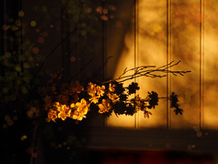 Monday Afternoon (LupaImages) Tags: flowers sun shade light afternoon sunday golden warm home indoors soft
