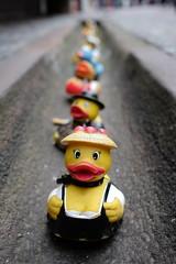 DSCF9110 (Jaime Crespo García) Tags: freiburg friburgo alemania deutchland germany ngc canales patos de goma canal duck ente