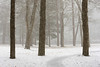 April Snow (Chancy Rendezvous) Tags: chancyrendezvous davelawler blurgasmcom blurgasm trees woods park forest snow squall path howestatepark massachusetts newengland
