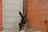 Landing (Caulker) Tags: shed cat fence jump