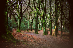 Path through the woods (Missy Jussy) Tags: woodland wood footpath forest leaves trees atmosphere moody piethornevalley piethorne rochdale lancashire canon canon5dmarkll canon5d canoneos5dmarkii 70200mm ef70200mmf4lusm ef70200mm canon70200mm dogwalk nature naturallight outdoor outside light